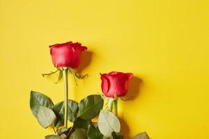 rote Rosen zum Valentinstag foto