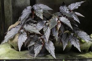 schöne grüne Blätter Pflanze foto