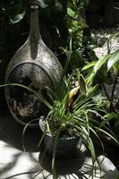 schöne grüne Blätter pflanzen in einem Garten foto