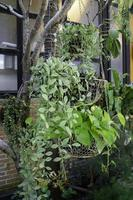 tropische Gartenpflanzen im Sommer