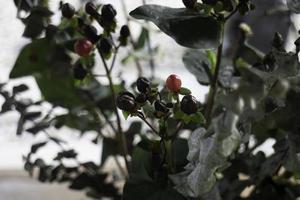 Beeren auf einem Baum