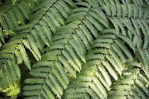 Farn Pflanzenhintergrund