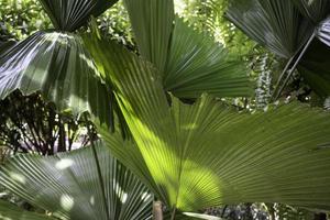 schöne grüne Palmblattpflanze foto