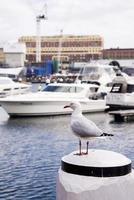 Möwe im Hafen foto