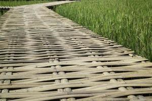 Gehweg in einem Reisfeld