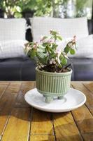 kleine Pflanze in einem Topf draußen foto