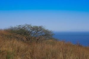 Landschaft mit kahlen Bäumen auf einem Feld neben einem Gewässer