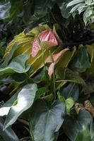schöne grüne Blätter und Pflanzen im Garten foto