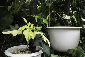 zwei Pflanzen in weißen Töpfen foto