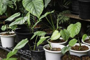 Pflanzen in Töpfen draußen foto