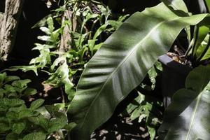 schöner grüner Blättergarten foto