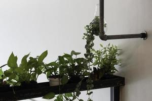 Zimmerpflanzen im Inneren foto