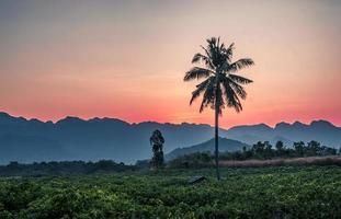 Schattenbild der Palmenkokosnuss mit Gebirgshintergrund