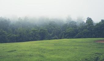 Nebel bedeckt Bäume foto