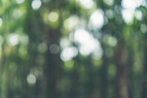 unscharfer Regenwaldhintergrund foto