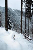Winterwaldblick durch Bäume foto