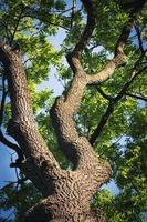 Blick auf einen Baum foto