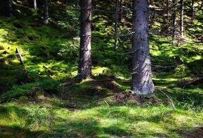 Bäume auf einer Wiese foto