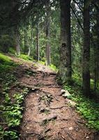 Weg in einem Wald foto