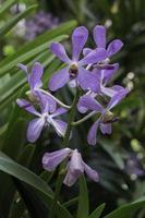 bunte Orchideen im Garten foto
