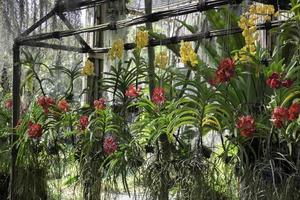 bunte Orchideenfarm foto