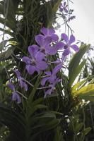 bunte Orchideen in einem Garten foto
