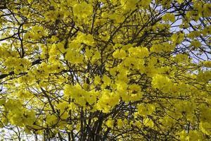 schöne gelbe Sommerblumenblüte foto