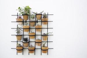 Pflanzenwand foto