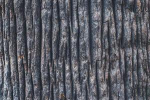 Rindenbeschaffenheit einer kalifornischen Fächerpalme foto