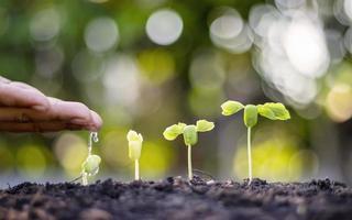 Bäume, die auf fruchtbarem Boden wachsen, das Konzept der Investition in die Landwirtschaft foto