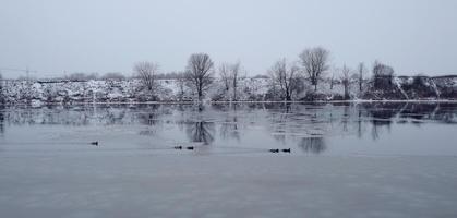 Enten schwimmen im offenen Wasser in Moskau foto