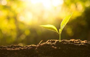 kleine Pflanze wächst im Sonnenlicht foto