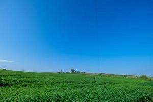 grün gesätes Feld mit blauem Himmel foto