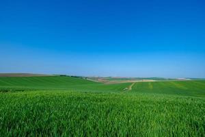 grünes Feld mit blauem Himmel foto