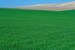 grasgrünes ländliches Feld foto
