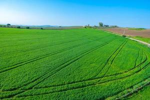 grünes ländliches Ackerland foto