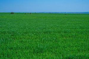 grasbewachsenes grünes Feld foto