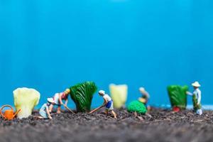 Miniaturgärtner, die Gemüse ernten, landwirtschaftliches Konzept foto