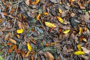 Herbstlaubhintergrund im Wald foto