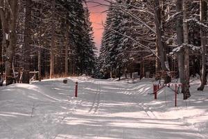 Langlaufloipe in einem verschneiten Winterwald bei Sonnenuntergang foto