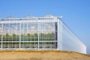 Frontal- und Seitenansicht des industriellen Gewächshauses für Tomaten foto