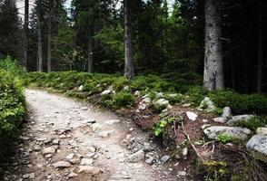Wanderweg in einem Fichtenwald foto