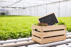 Tafel mit frischem vom Bauernhofwort auf Holzkiste foto