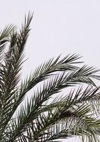 Palmen und blauer Himmel in einem tropischen Klima foto