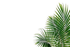 tropische Palmblätter auf einem weißen Hintergrund foto