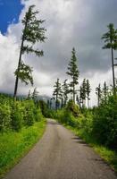 Asphaltstraße durch einen Bergwald foto