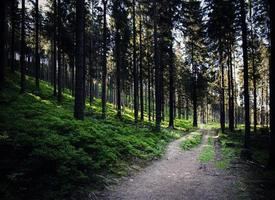 Weg durch einen dichten Wald foto