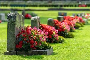 Reihe von Grabsteinen mit roten und rosa Blüten foto