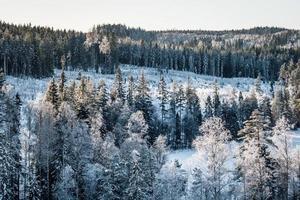 Luftaufnahme über einem Wald im Winter