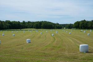 geerntetes Feld gefüllt mit weißen Heuspulen